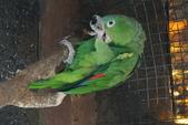 108 哥斯大黎加 亞雷納 拉巴斯瀑布生態園區:DSC06756.JPG
