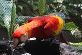 108 哥斯大黎加 亞雷納 拉巴斯瀑布生態園區:DSC06759.JPG