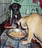 珠珠JUJU 愛 絕不是 幾個簡單文字 就能表達得清楚的  :珠珠跟壯壯 得犬瘟的治療期間